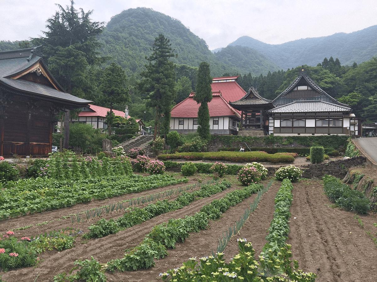 今年6月に行った、長野県は小布施の岩松院。北斎晩年の作の肉筆天井画があります。